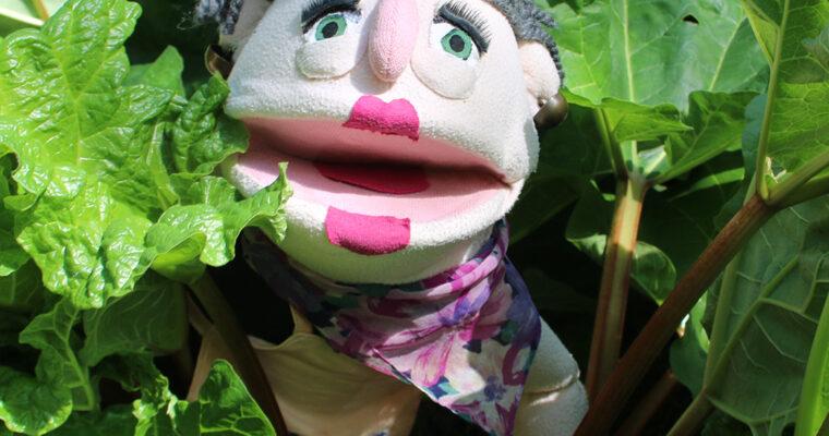 Rhubarb (Rabarber) // Season: Spring 🌼, Summer ☀️ & Autumn 🍂